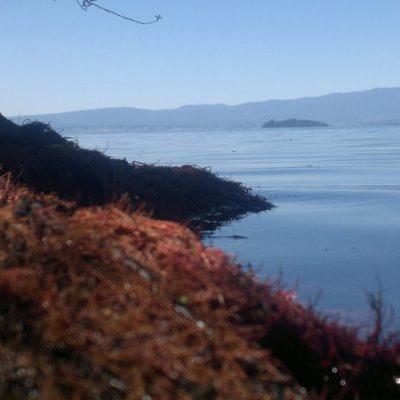 Lago Ranco3